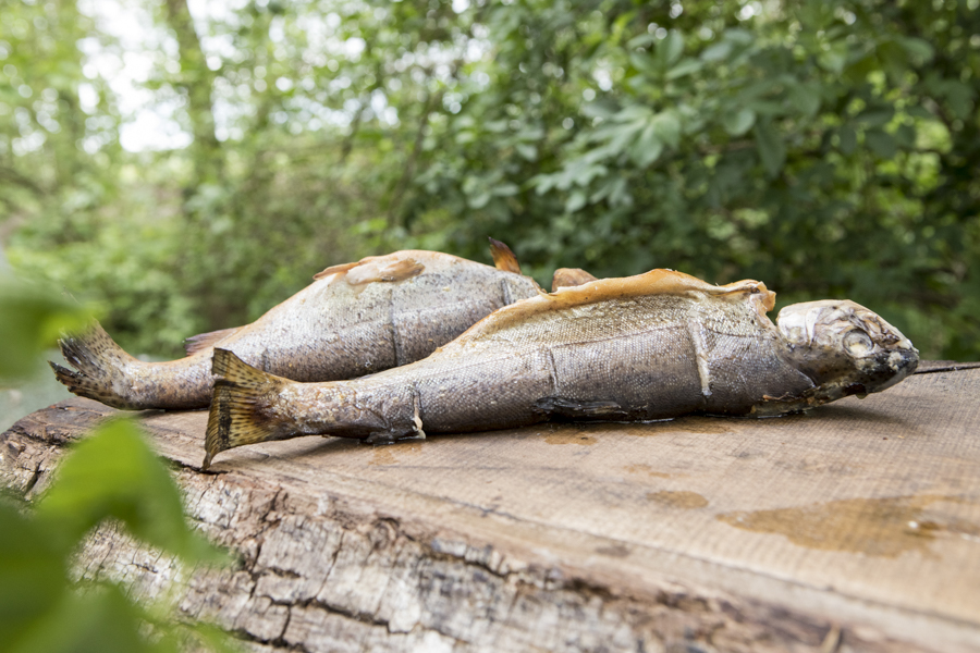 geräucherte Forellen Fischrezepte